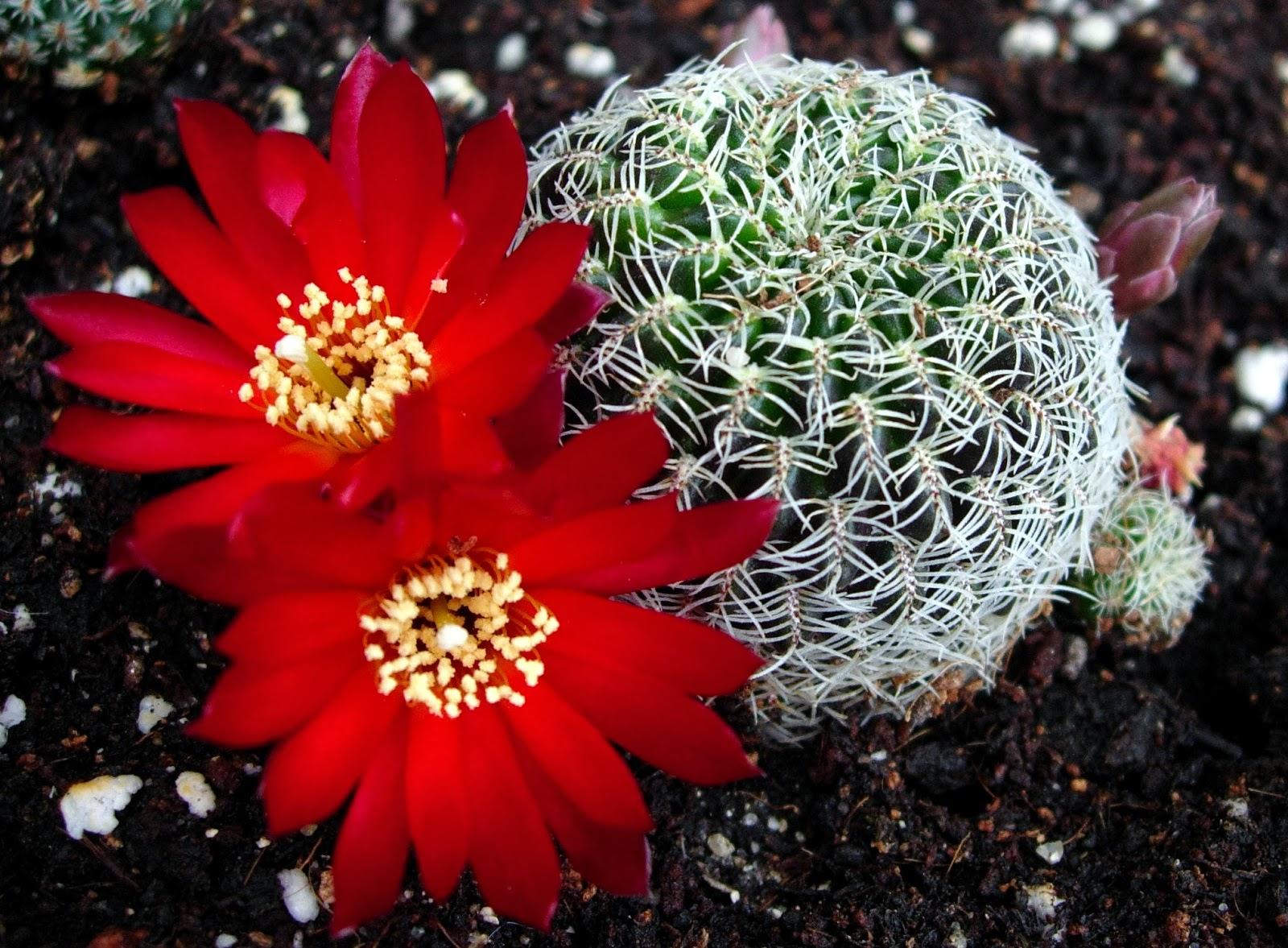 World Flower Size Antaexpocoaching