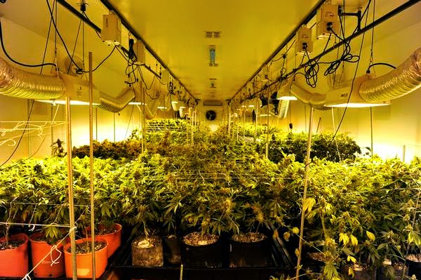 How To Grow Weed Indoors Ultimate Detox