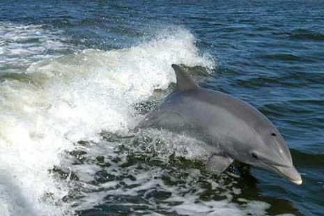 Lumba-lumba itu membawa berkah bagi nelayan