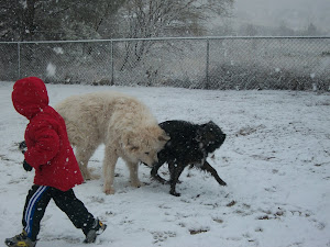 Kids and dogs love snow