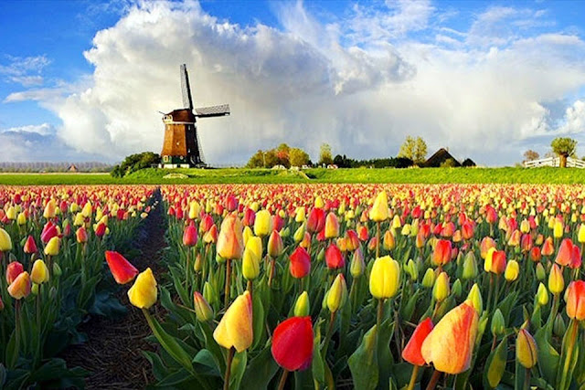 Holland's Windmill