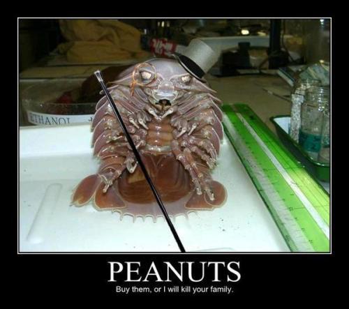 Yes Meme Cat Snow Crab Love: Say &q...