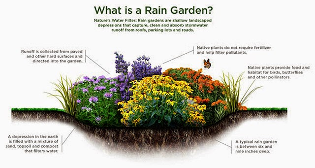 Think Global Garden Local Rain Gardens For Clay Soil In