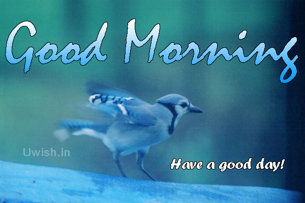 Good morning with a blue bird have a good day uwish wishes and good morning e greeting card and wishes m4hsunfo