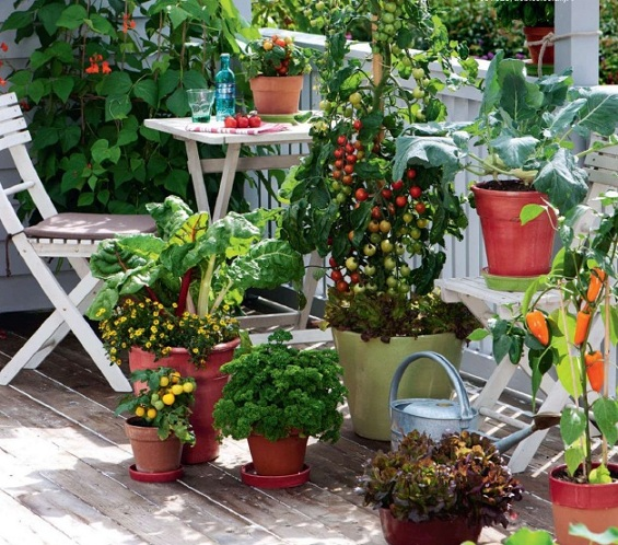 Best Fruits To Grow In Pots: Cottage Garden: How To Plant Veggies