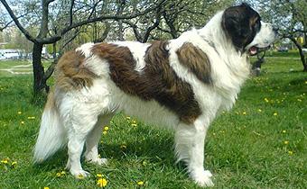 Royal Canin Breed корм для собак выгодно купить в zoochic