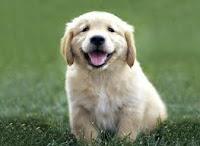 images Fases da vida de um cão