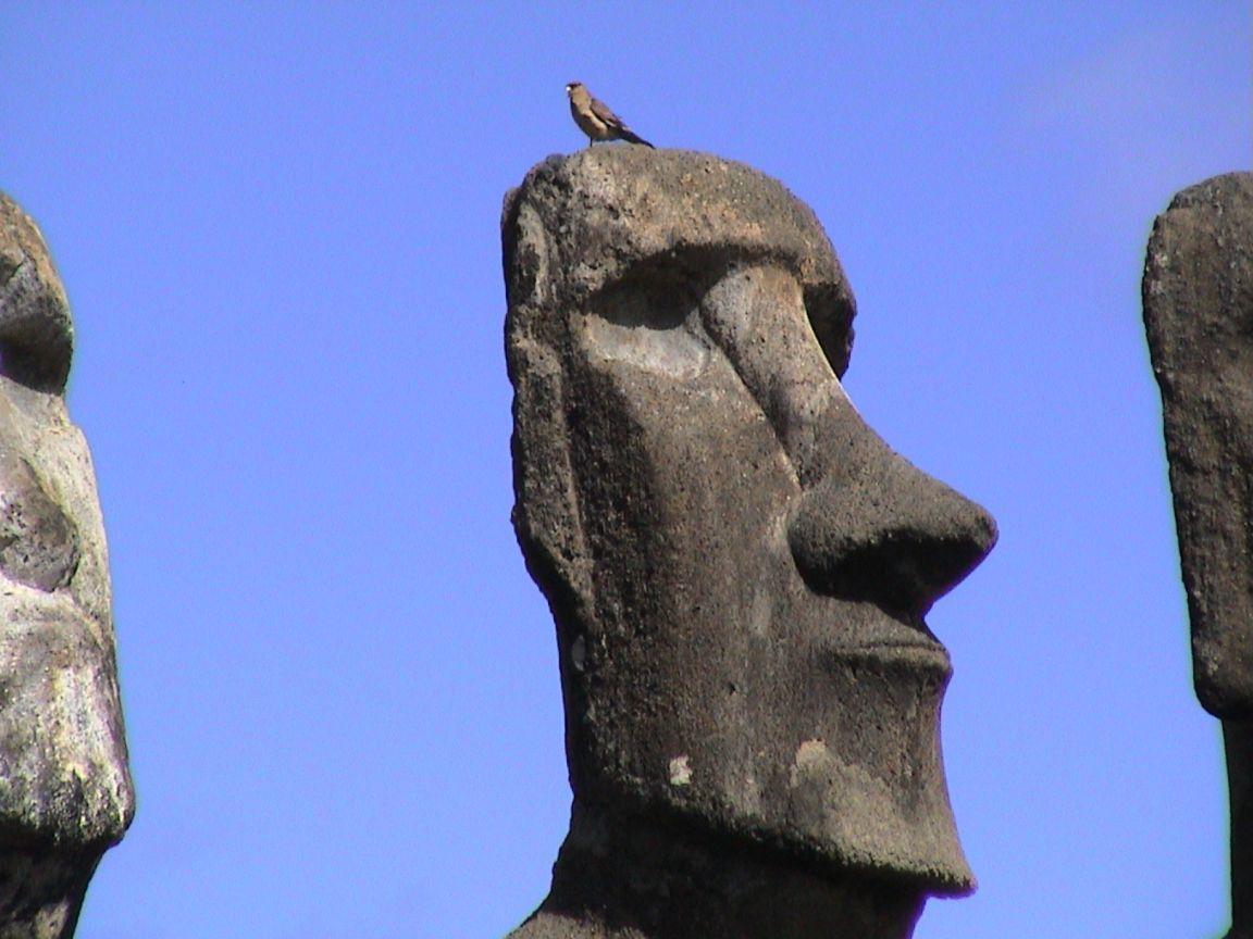 Campoeng Cmoneng Misteri Patung Moai Di Pulau Paskah Chili
