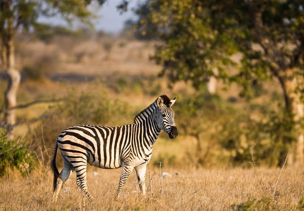 Rondreis Zuid Afrika 2018