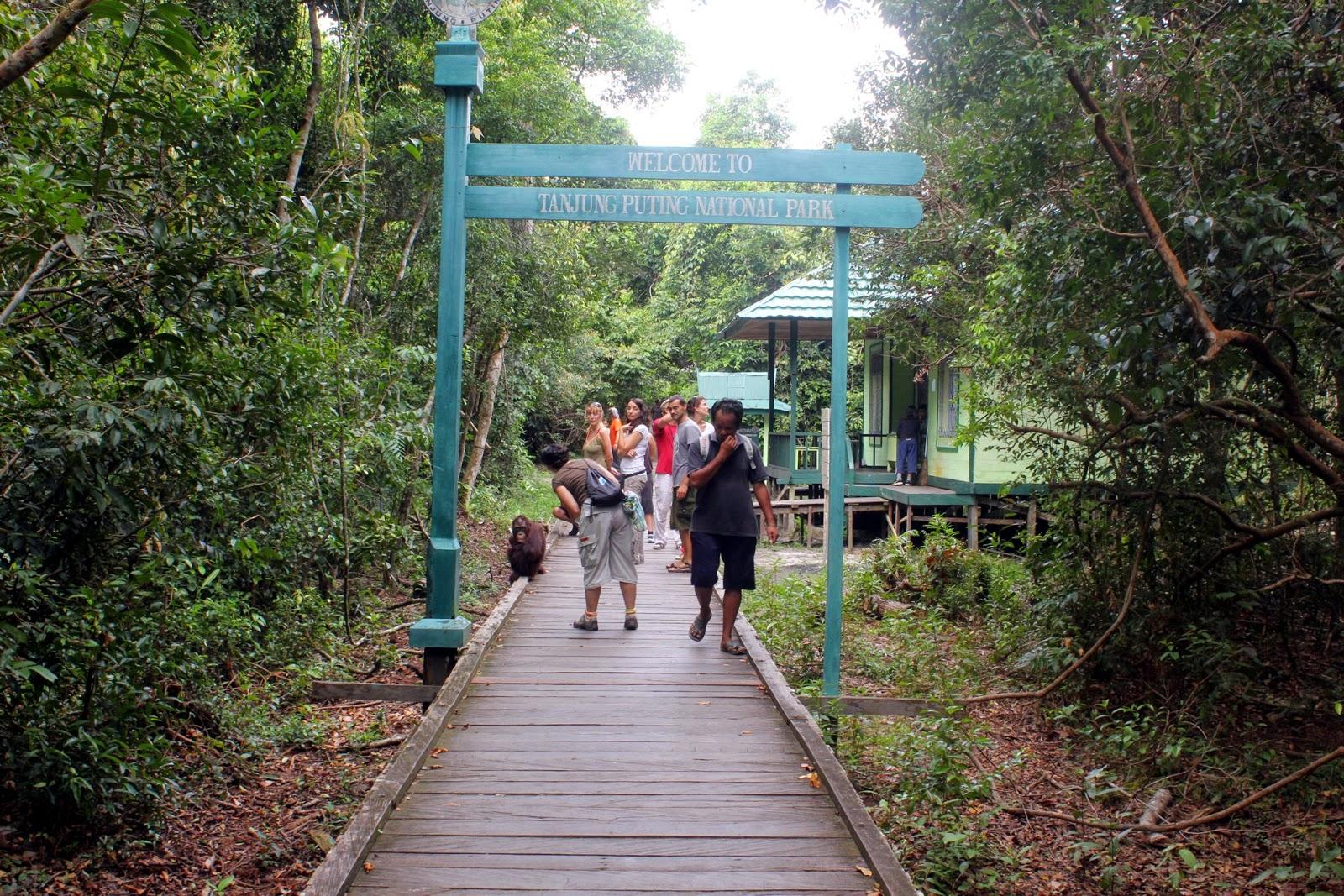 Wisata Tanjung Puting