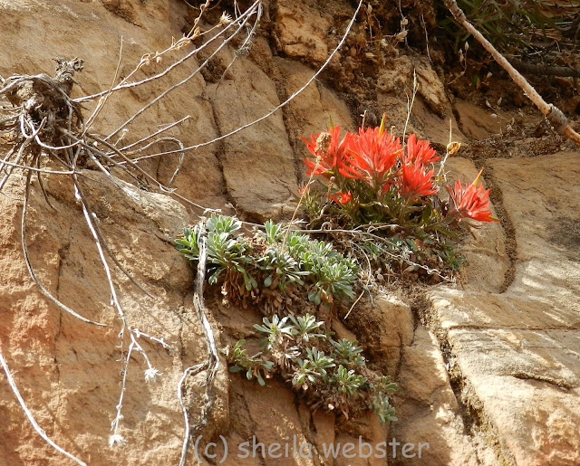 the bright orange plant grows from the rocks