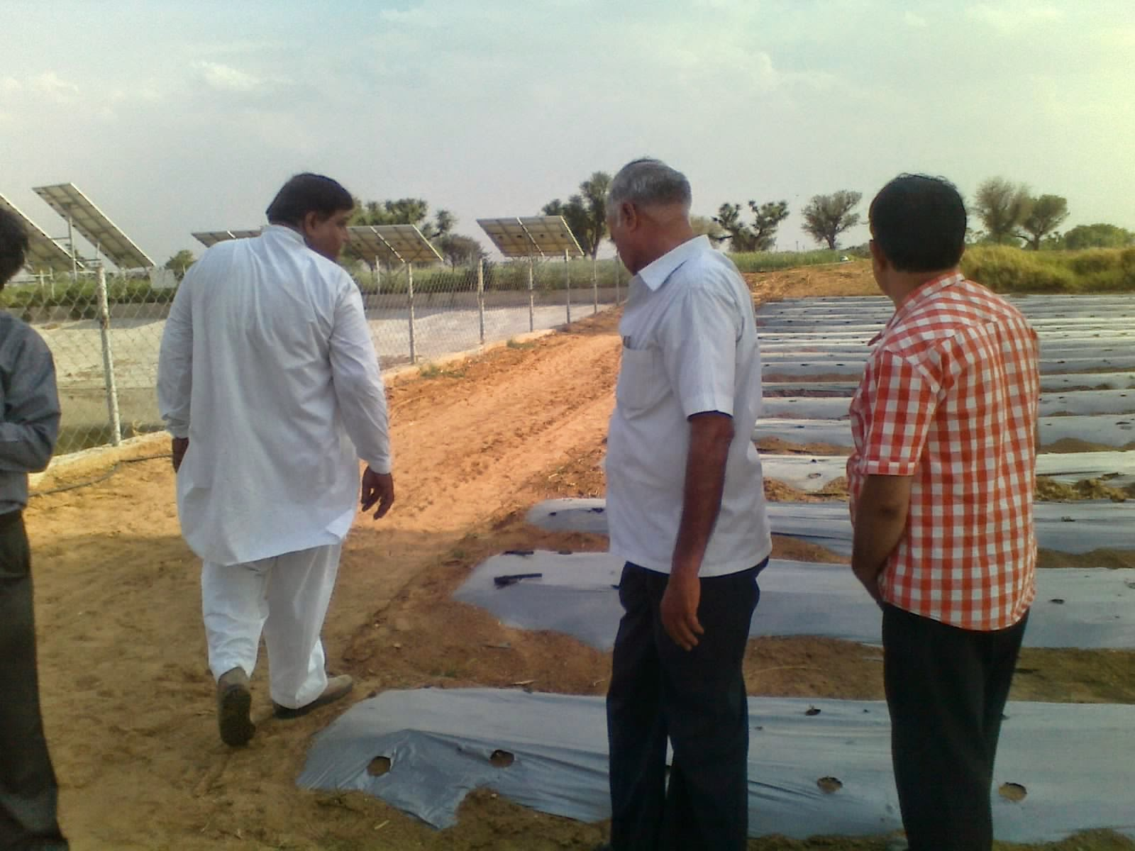 STEVIA CULTIVATION WITH MULCHING