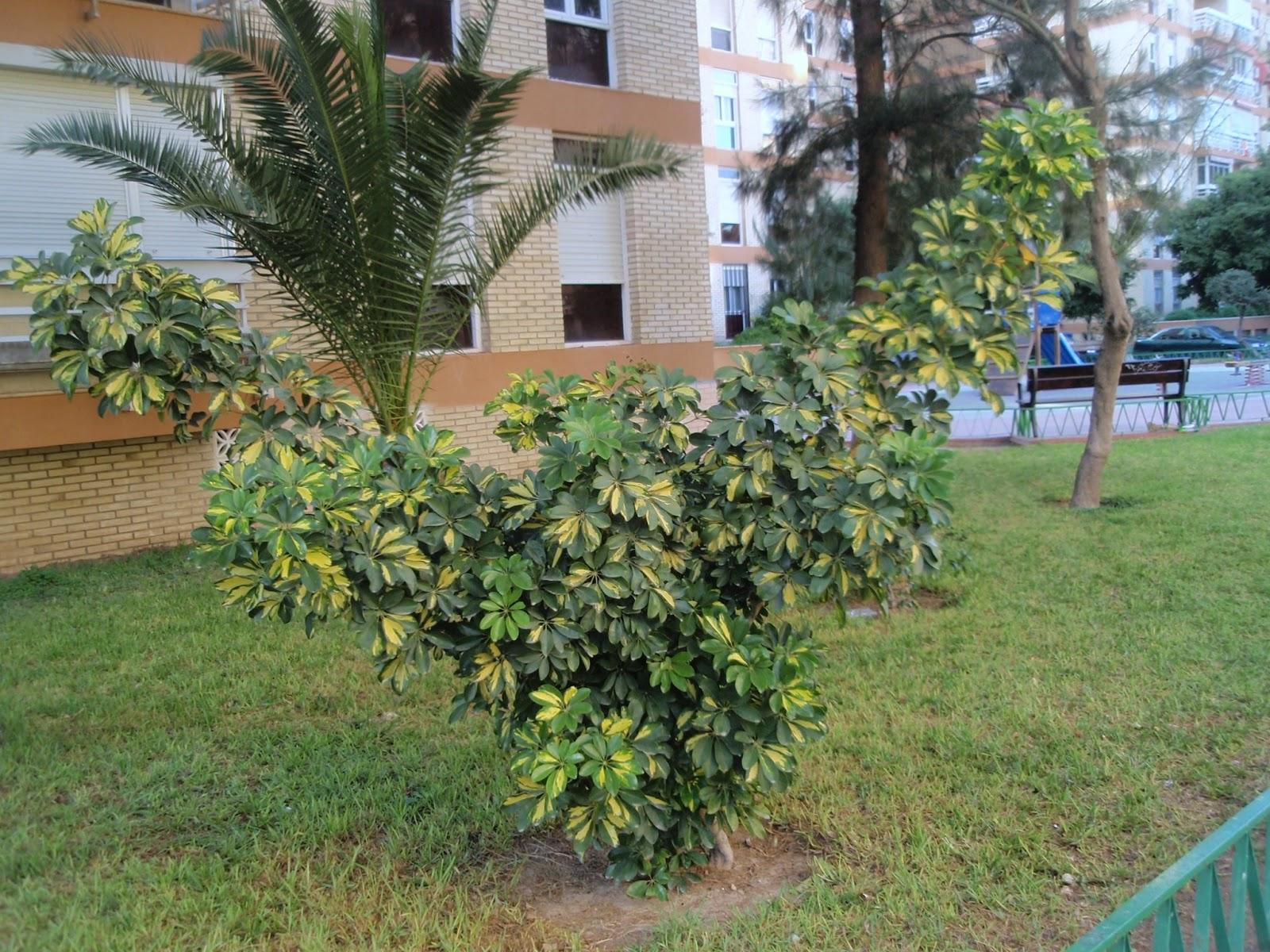 Herbario virtual de banyeres de mariola y alicante for Fotos de jardines particulares