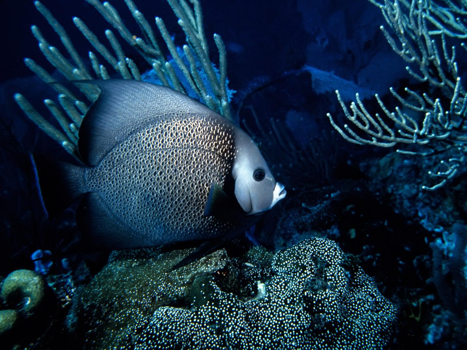 http://1.bp.blogspot.com/-rN32NK7XVu4/UIQcLs3AECI/AAAAAAAABSM/OEMaXxs9zec/s1600/Underwater%2BWallpaper%2B(64).jpg