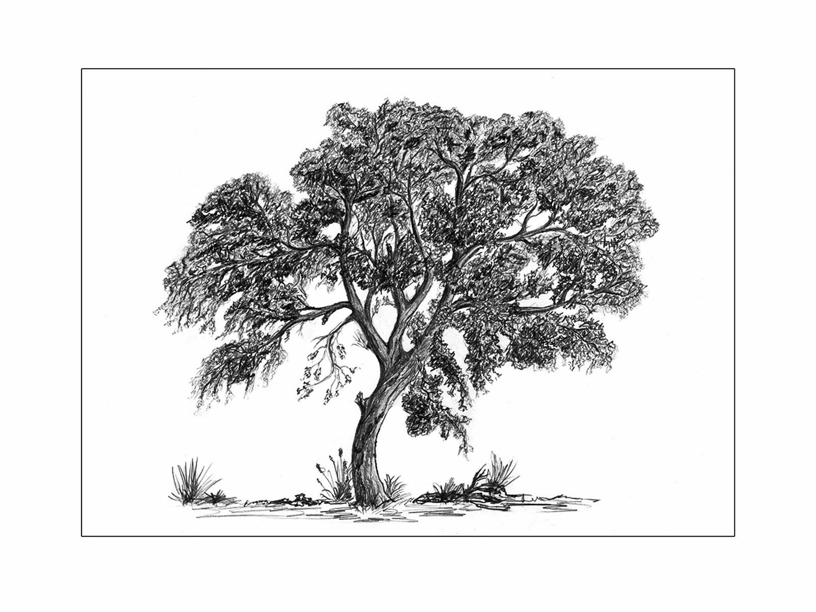 Dessin arbres - Arbres dessins ...