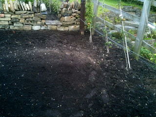 Weeding a garden bed for kale and cabbage, problem patches.