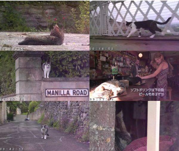 [TV-Variety] 岩合光昭の世界ネコ歩き「イングランド」 – 2016.10.10 s