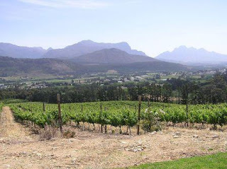 West-Coast-Cape-Wine-Haven-Vineyards