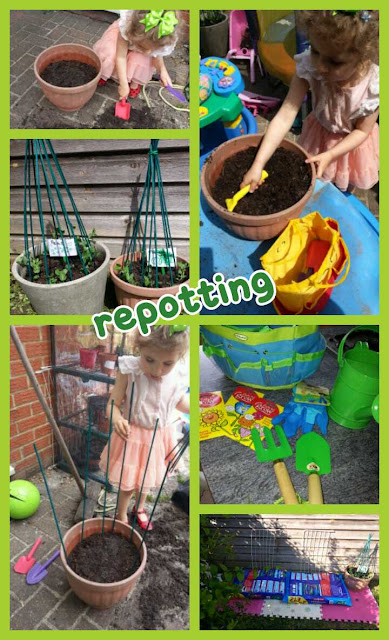 Digging, repotting, project grow your own