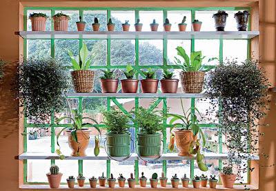 Aprenda a cultivar cactos e suculentas