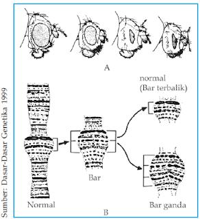 Mata Drosophilla melanogaster