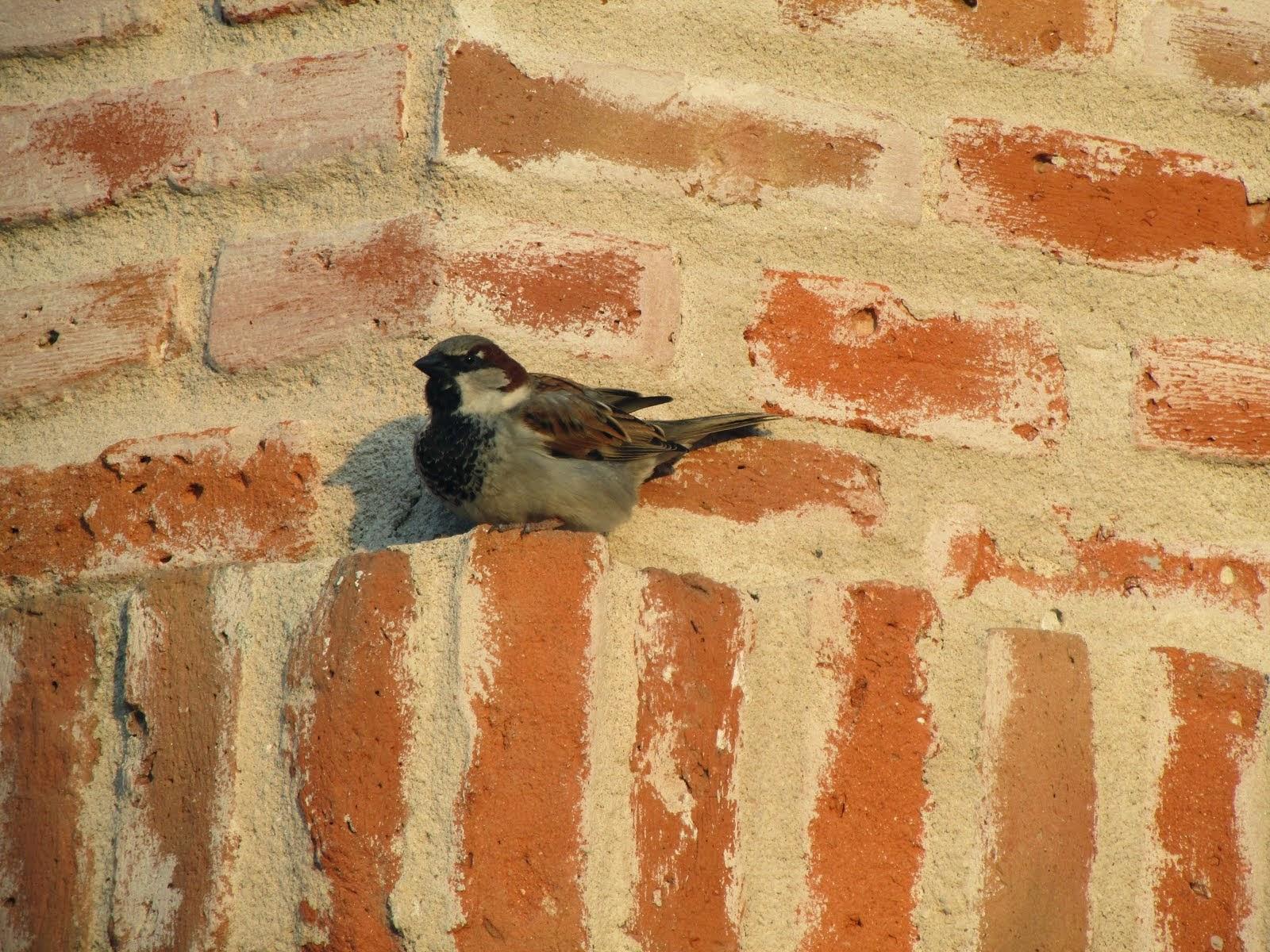 Os poemas são pássaros que chegam não se sabe de onde e pousam no livro que lês.