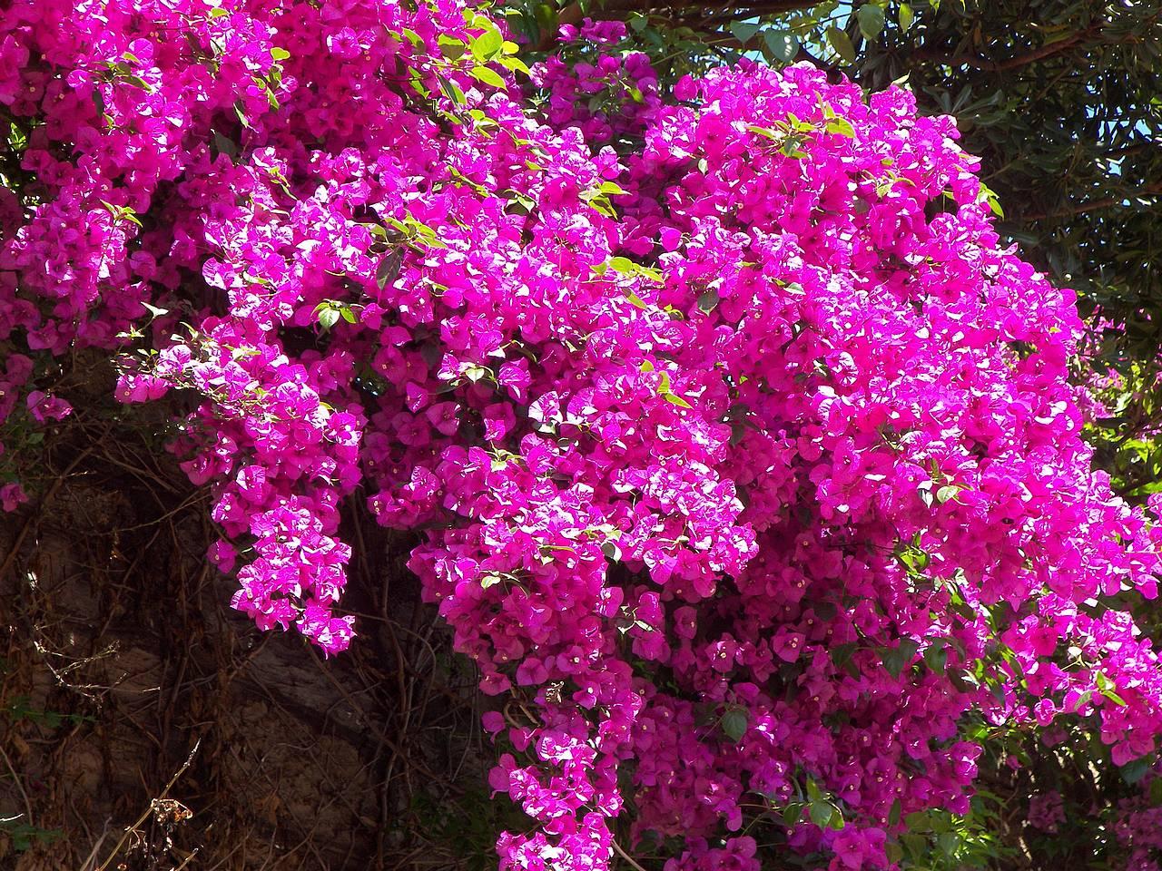 Dalla blog limpeza de casa com ervas e plantas for Pianta fiorita da esterno