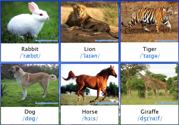 Nama-nama binatang dalam bahasa inggris (bergambar)