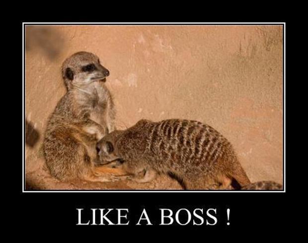 Funny Like A Boss Meme : Funny like a boss meme imgkid the image kid