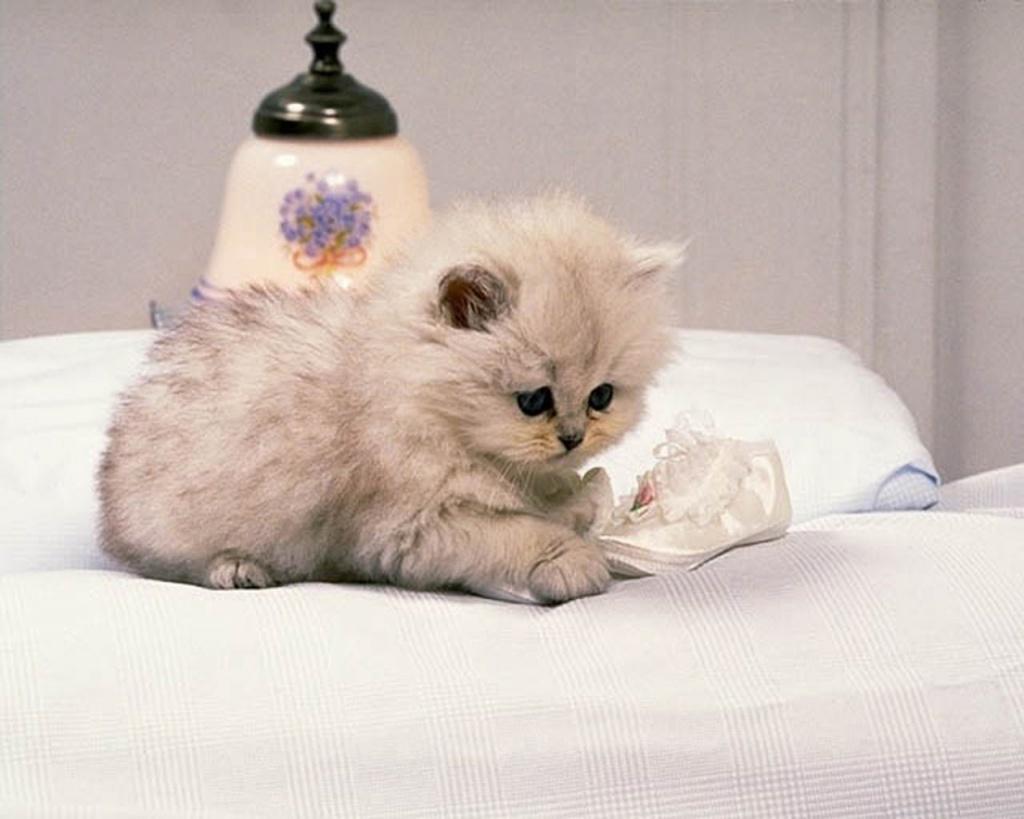 http://1.bp.blogspot.com/-rOZhXg264mA/T-bCseM2s0I/AAAAAAAAGRE/mq9jMP-qFyY/s1600/Cat-wallpaper-17.jpg