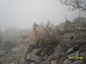 Los habitantes de la montaña