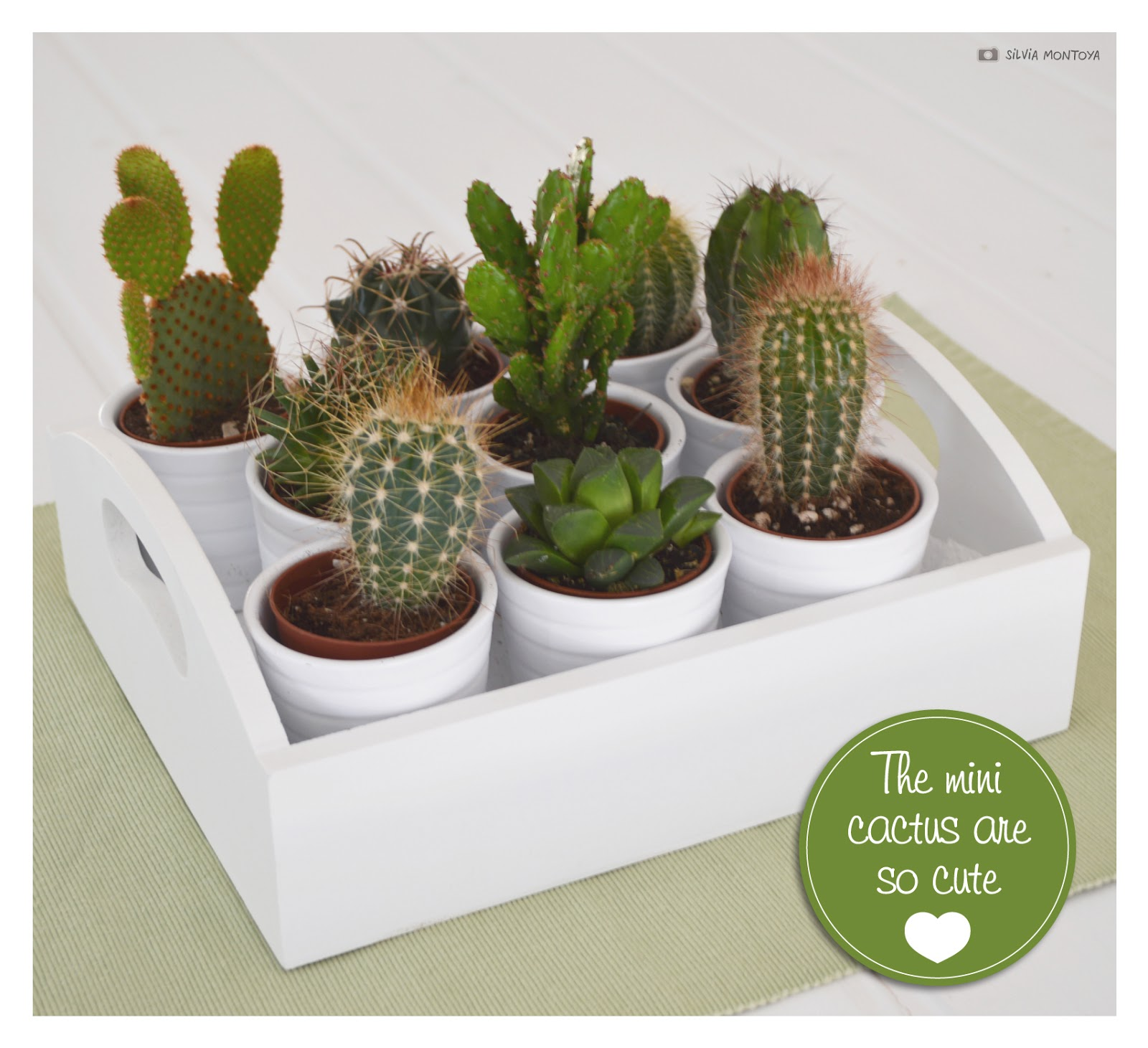 cactus mini. Black Bedroom Furniture Sets. Home Design Ideas