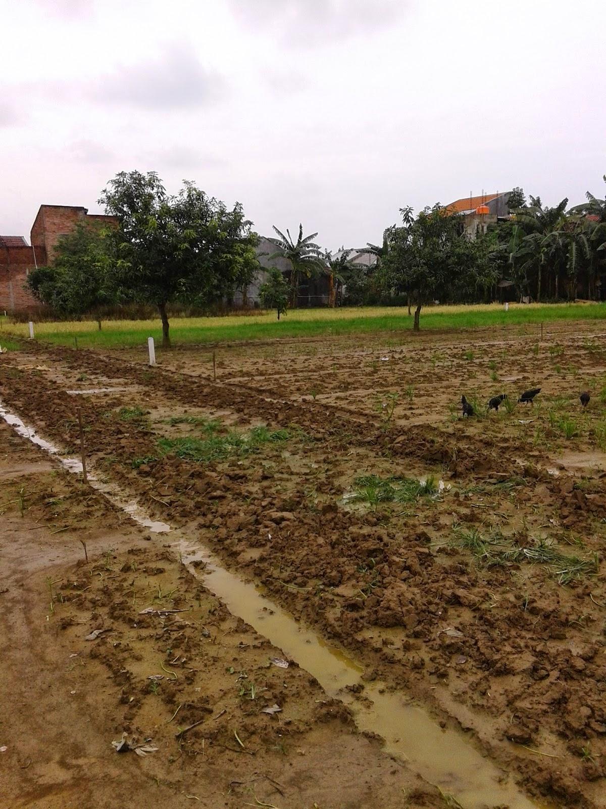 Tanah kavling dijual purwokerto