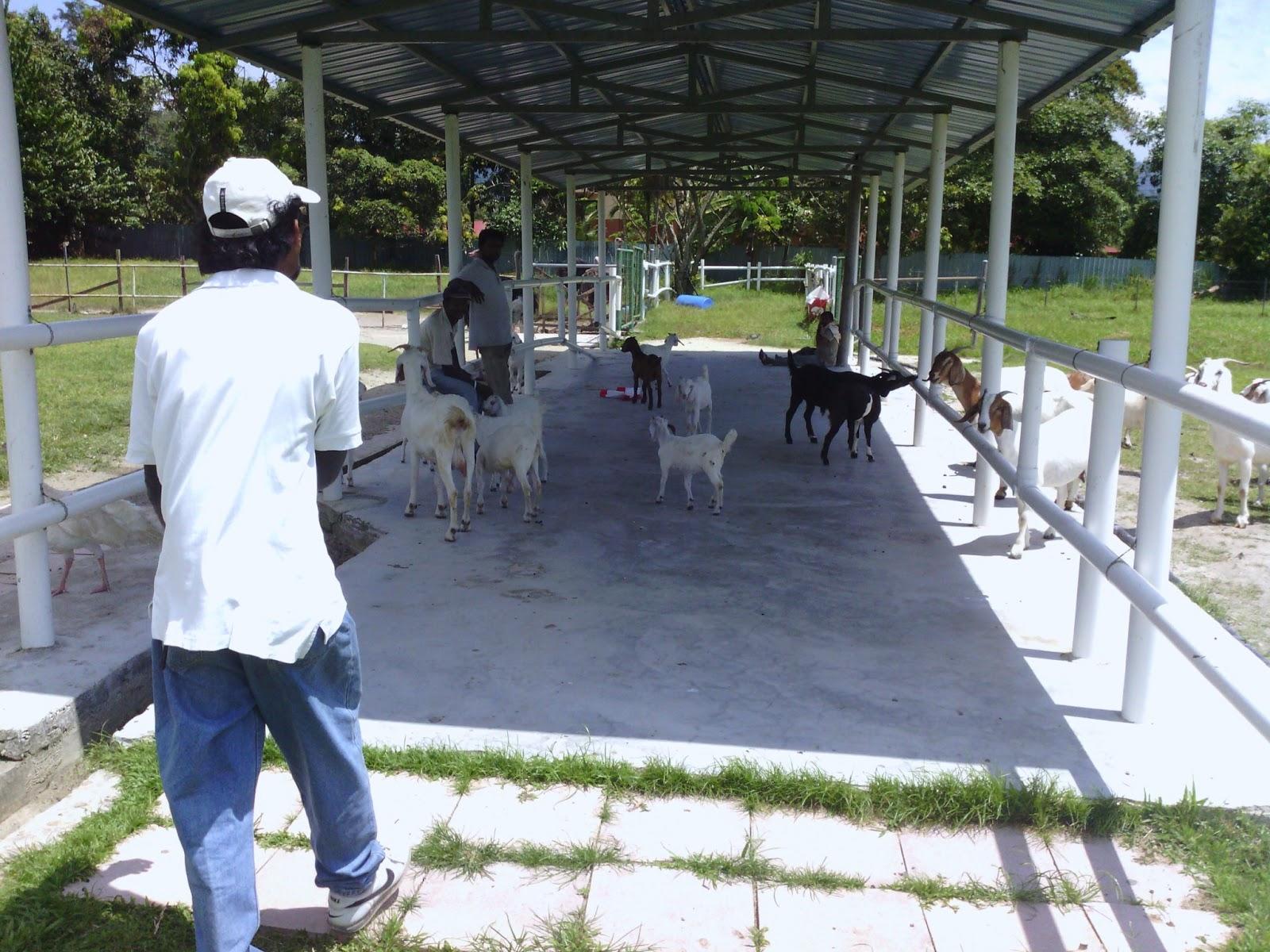 Jelita ostrich farm