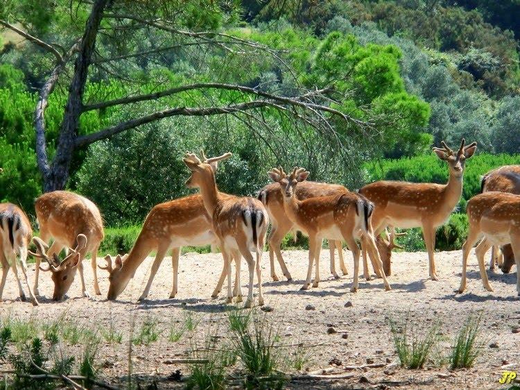Tapada de Mafra Natural Park