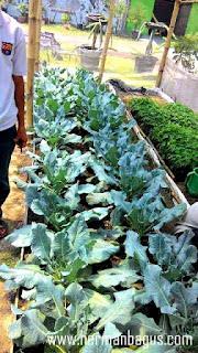 Agroguna Kebun Buah dan Sayuran Bojonegoro