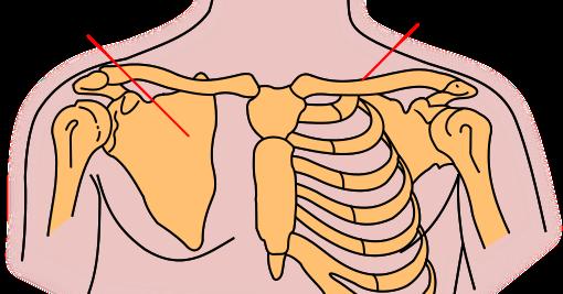 pain sensation: collarbone pain, Cephalic Vein