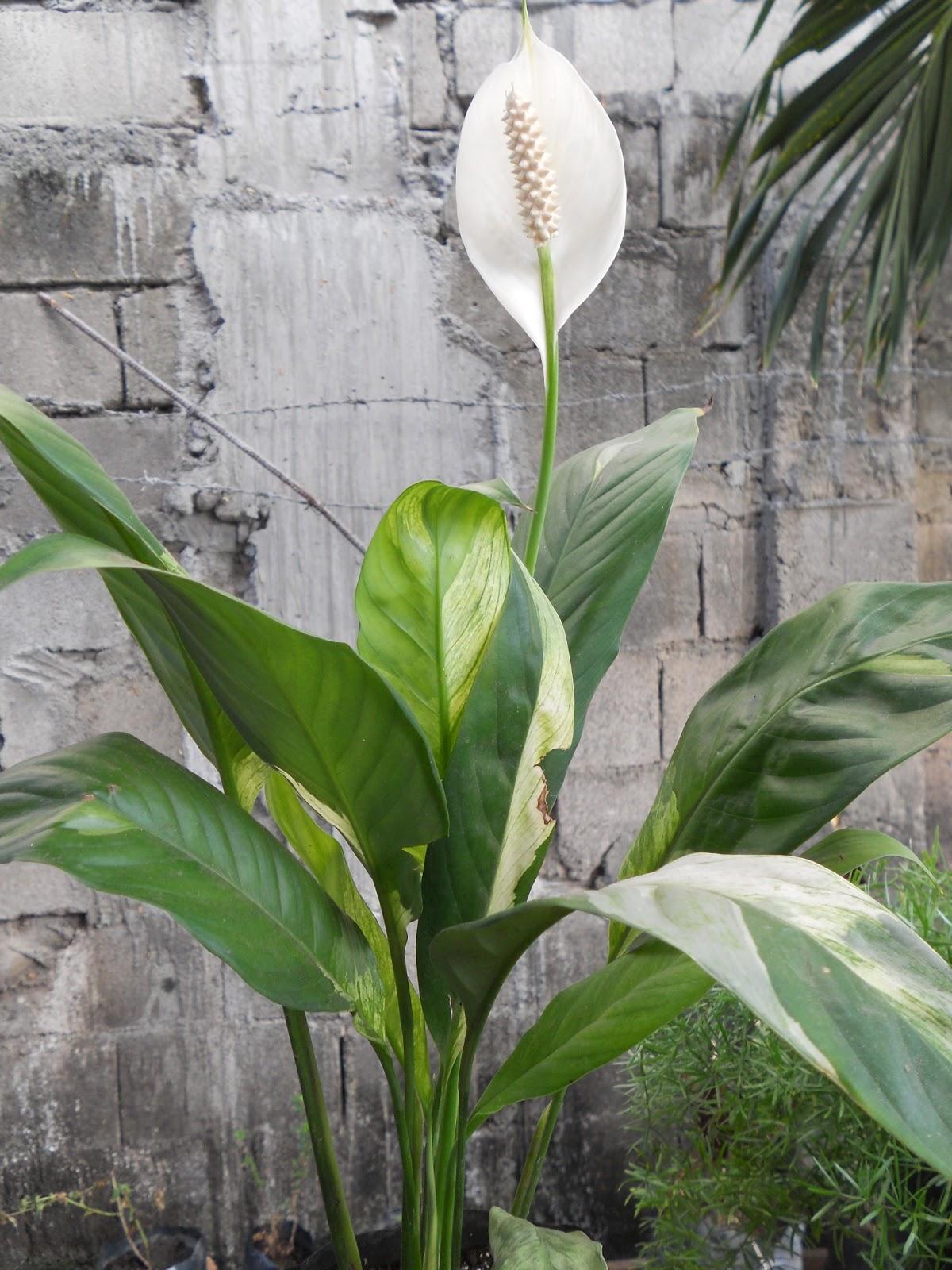What is names of indoor plants ask home design - Indoor plants names ...