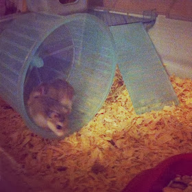Alan & Victor the hamsters