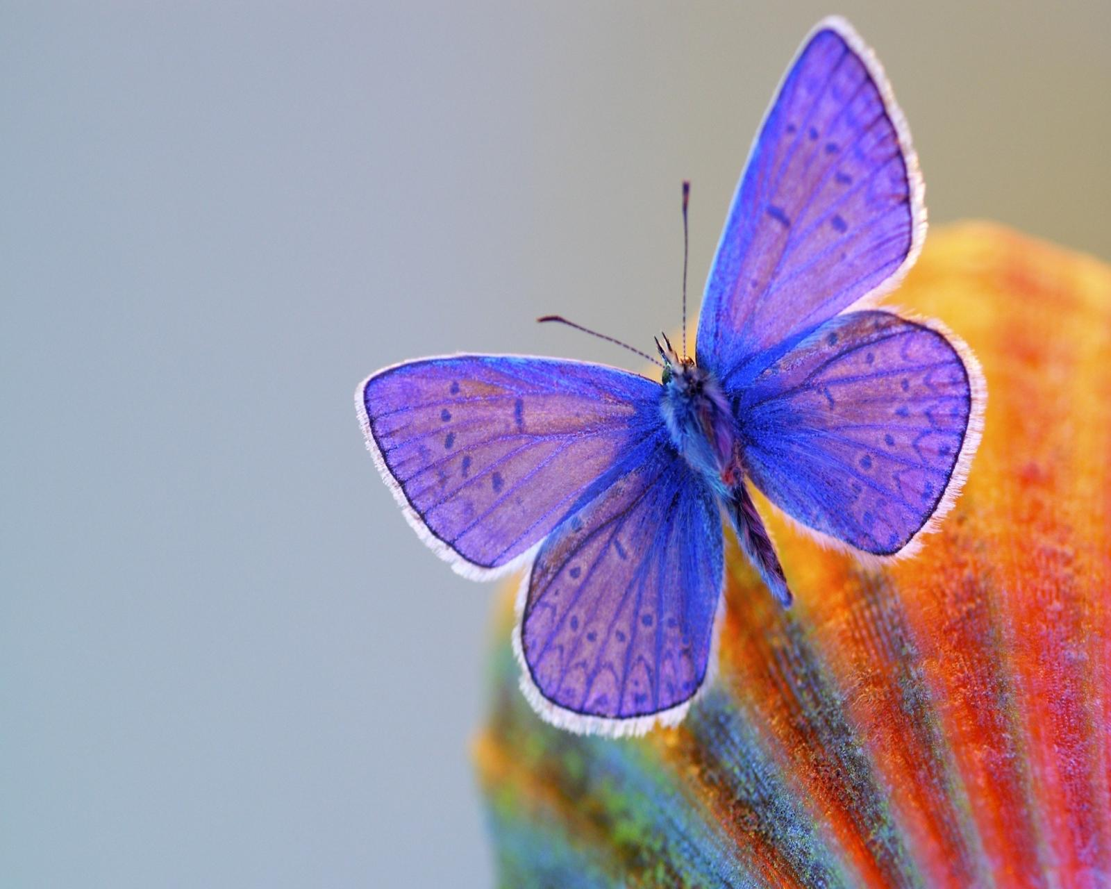 latest wallpapers of butterflies - photo #38