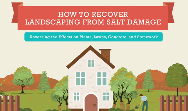 How to Recover Landscaping from Salt Damage