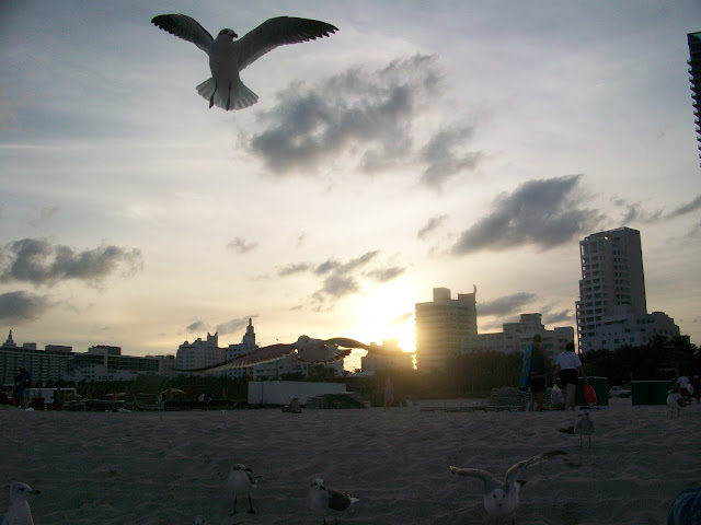 Seagulls,Beach,sunset