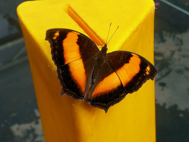Image of a butterfly on a yellow background