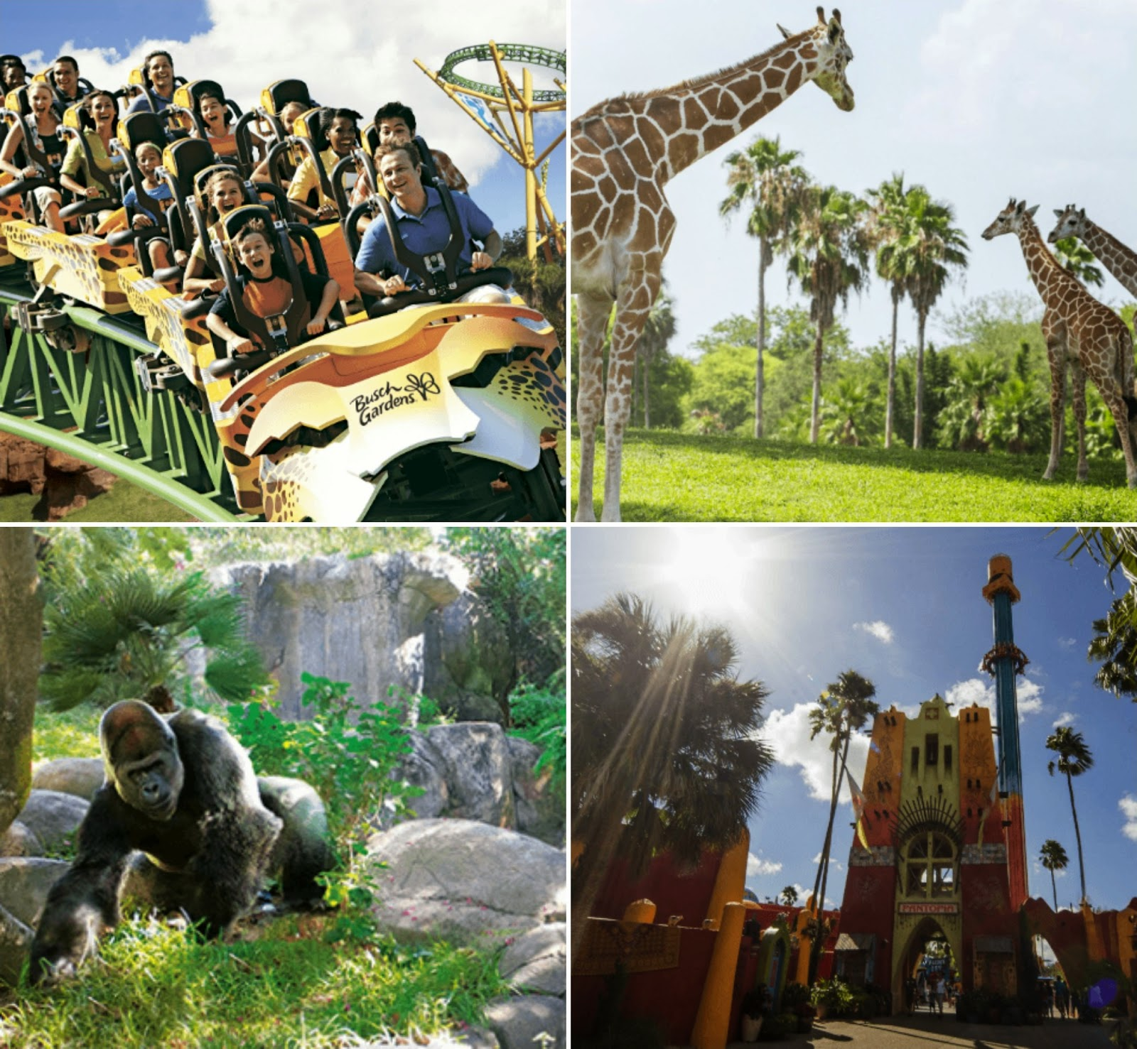Busch garden tampa tickets busch gardens tampa bay save How far is busch gardens from orlando