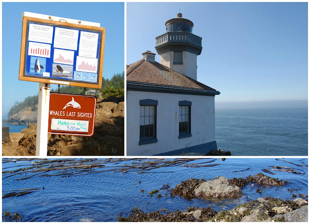 trip to lime kiln state park where many come to whale watch