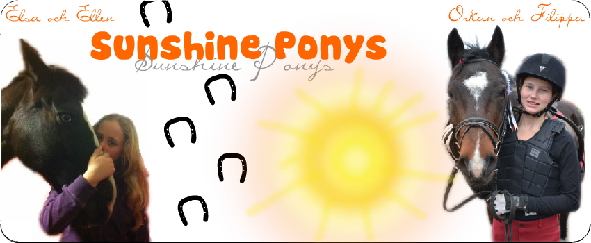 Sunshine Ponys