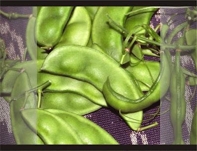 Kacang kratok / Roay