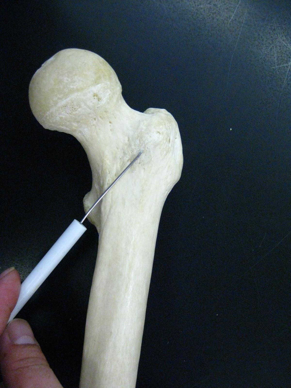 Human anatomy vascular system