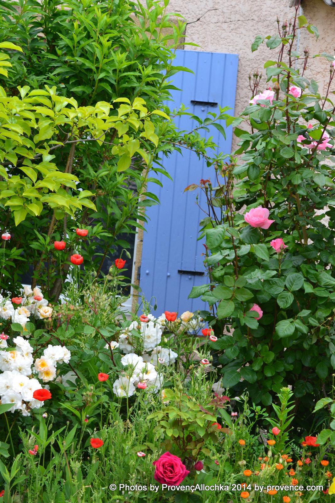 ma maison,patio,roses