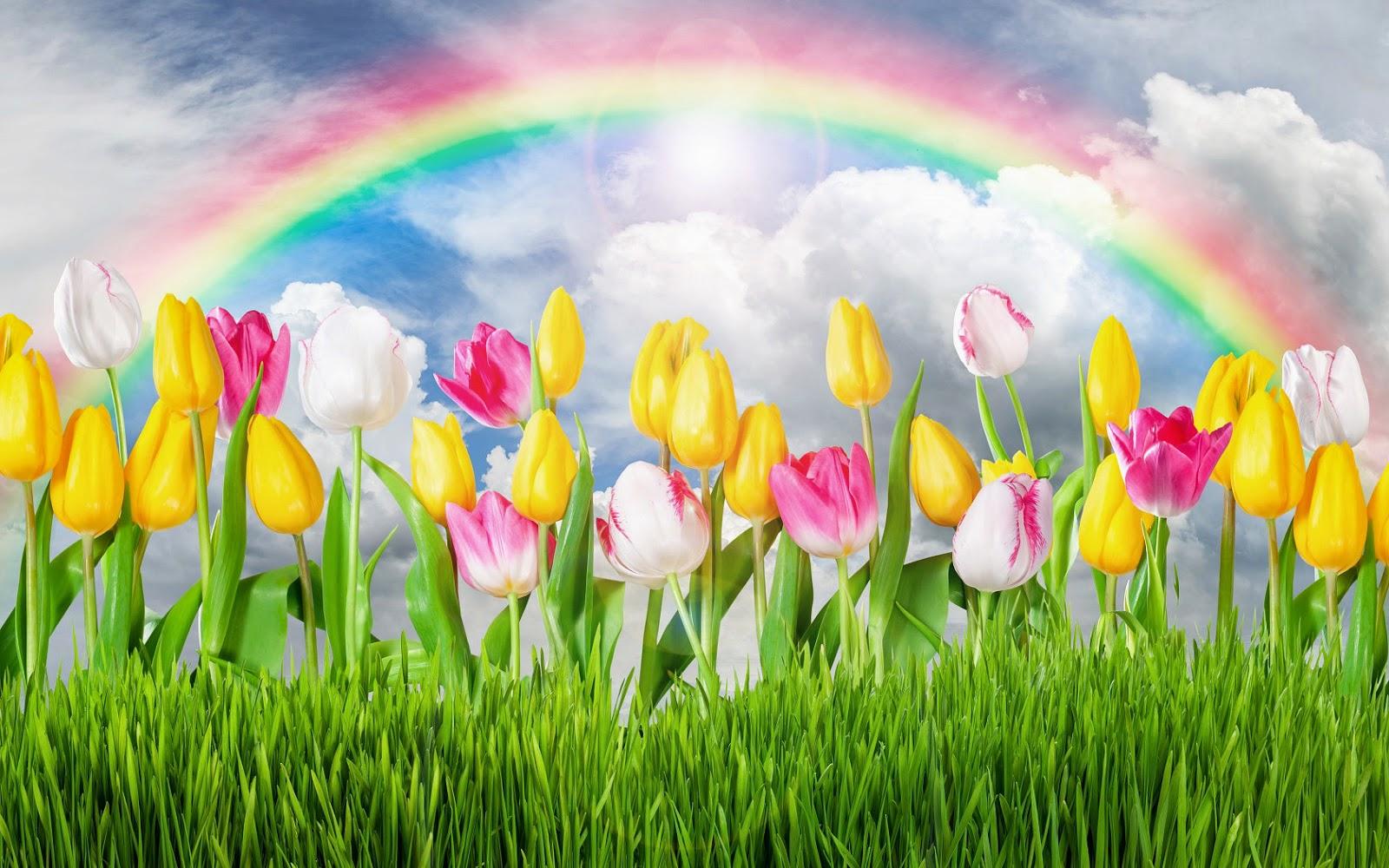 Roze tulpen, gras en regenboog in de lente